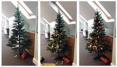 The stages of the Receptional Christmas tree. It's feeling very festive in the office today Festive, Christmas Tree, The Originals, Holiday Decor, Home Decor, Teal Christmas Tree, Decoration Home, Room Decor, Xmas Trees