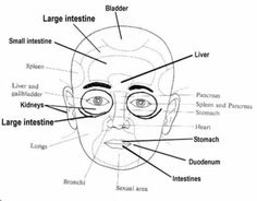 Traditional Chinese Medicine Facial diagnosis Chart