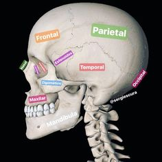 Medicine Notes, Medicine Student, Sports Medicine, Anatomy Bones, Skull Anatomy, Muscle Anatomy, Body Anatomy, Human Skeleton Anatomy, Vascular Ultrasound