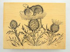 "Stamp Rosa House Mouse Collection - No. 35 Mouse Napping on Thistle, Wood Mounted Stamp, 1997, House Mouse Designs.  Wood Block Size: W: 5"" x H: 3-3/4""  Used stamp in good ... #scrapbook #stampede"