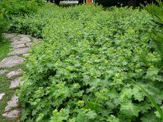 Garden Inspiration, Gardening Tips, Woodland, Herbs, Green, Flowers, Lund, Switzerland, Herb