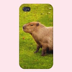 Capybara iPhone 4/4S Covers