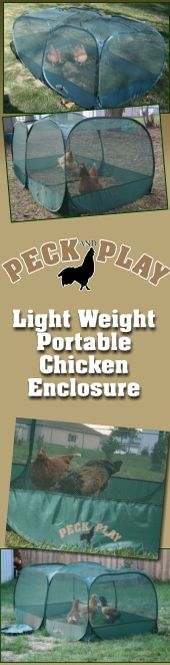 If I were to sell my eggs from a stand I would totally bring one of these and my two or three best birds!! how neat!!    Murray McMurray Hatchery - Peck and Play Chicken Enclosure