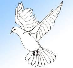 Image result for pigeon drawing