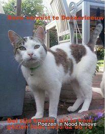 GEZOCHT  Remi is het laatst gezien op Maandag 24/02/2014. te Denderleeuw.  Het is een kater van een jaar oud! en NIET gecastreerd Hij heeft de naam Remi en is angstig van mensen. Remi is veel kleiner dan een gewone kater. Hij draagt een groen halsbandje met een belletje.  Als iemand hem gezien heeft graag contact op te nemen op het nummer; 0495/62.88.70  Alvast Bedankt!