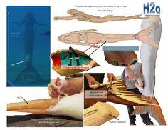 H20 tail design Mako Mermaids Tails, H2o Mermaid Tails, Realistic Mermaid Tails, Diy Mermaid Tail, H2o Mermaids, Silicone Mermaid Tails, Mermaids And Mermen, Rikki H2o, Mermaid Monofin