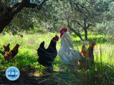 Kreta wandelingen - Zorbas Island apartments in Kokkini Hani, Crete Greece 2020 Crete, Animals, Girl Hairstyles, Greece, Crete Holiday, Campsite, Animales, Animaux, Animal