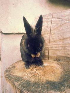 Bunny Rabbit, Bunny, Animals, Rabbits, Cute Bunny, Animales, Animaux, Bunnies, Animal