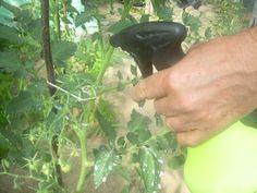 oprysk pomidorów mlekiem Diy And Crafts, Vegetables, Plants, Gardening, Grill, Fitness, Crop Protection, Plant Parts, Milk