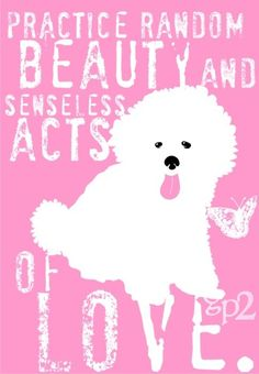 Bichon Frise Dog Art Print  Perfect Dog Print for by GoingPlaces2, $14.00