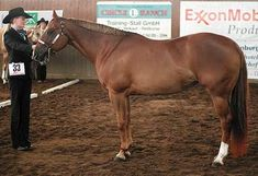 Showmanship at Halter, a Western show class for stock horses and the requirements and patterns of Showmanship at Halter.