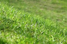 How to Make Your Lawn Healthy and Green (4 Steps) | eHow