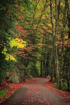 Forest Path, Smokey Mountains, Tennessee / colors of autumn