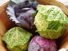 Cabbage zone 7 8 9 Fall winter crop