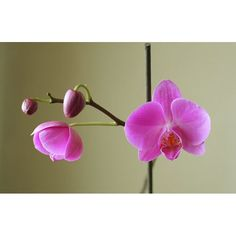 My started to Bloom☺ Bright Future, Orchids, Past, Photographs, Bloom, Flowers, Past Tense, Photos, Royal Icing Flowers