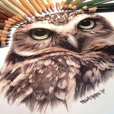 Hand Drawings - by Karla Mialynne #arte #desenho #coruja #lapis #cor #art #draw #drawing #owl #pencil #color #colour #karla #mialynne