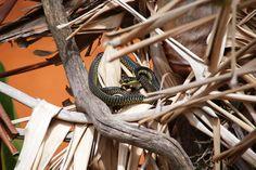 Lawnwood Snake Park Plettenbergbay