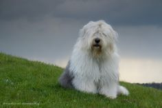 Sophie by Cees Bol on 500px