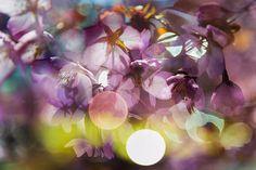 Multiple Nature 254 Nature, Flowers, Plants, Naturaleza, Plant, Nature Illustration, Royal Icing Flowers, Off Grid, Flower