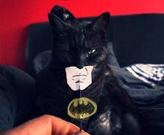 Micio Batman!