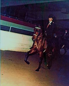 """Laurie showing Marjur's Malek (Fadjur x Kishona) in Amatuer English Pleasure NIAHAC, 1977, Malek's first show.  This photo was taken by the """"professional"""" photographer at the show....he didn't do a very good job with the lighting on this one!"""