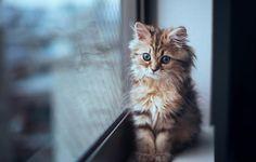 Most-Photogenic-Kitten-27