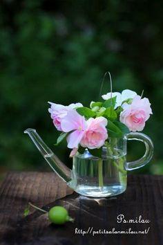 夏の庭を飾る花、インパチェンス。    別名「アフリアカホウセンカ」    アフリカ東部原産。     八重咲きのものもあるのですが...