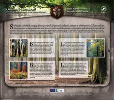 Typy siedliskowe lasów