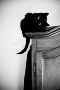 Sideways Kitten on a Wardrobe