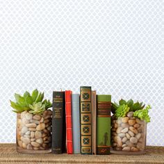could these live on my dark bookshelves, do you think?  DIY Succulent Bookend -  Country Living