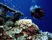 snorkel at Tusa Dive #ecotourism #Queensland #Australia