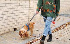 Η εργασία εκτός σπιτιού εκτιμάται ότι αυξάνει τον κίνδυνο μόλυνσης κατά 76% - Οι κατ' εξοχήν παράγοντες κινδύνου μόλυνσης κατά τη διάρκεια lockdown Kanken Backpack, Dogs, Animals, Animales, Animaux, Pet Dogs, Doggies, Animal, Animais
