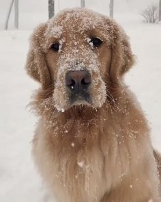 """Receive terrific recommendations on """"Golden Retriever dogs"""". They are on call for you on our website. Cute Dogs And Puppies, I Love Dogs, Pet Dogs, Dog Cat, Pets, Doggies, Baby Animals, Funny Animals, Cute Animals"""