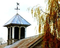 cupola and willow