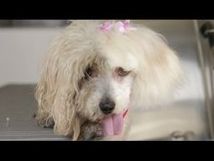 Maggie, blind in one eye, fur painfully matted, in a high kill shelter and a miracle happens. Shelter Dogs, Animal Shelter, Rescue Dogs, Puppy Cam, Puppy Love, Animals Beautiful, Cute Animals, Homeless Dogs, Wolf Love