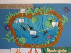 Life Cycle of a Frog classroom display photo from 'Newbie Teacher'