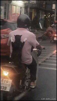 CAT GIF • Fearless and amazing Cat gets a scooter ride like a kid They see me rolling