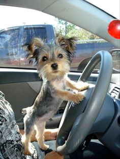 ♥ You can drive me anywhere, Sweetie!!