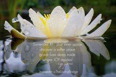 #quote #suzygreene #joy #grace #zen #flowers