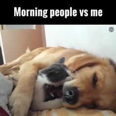 Cat loves the dog - Katzen - Dog Funny Dog Memes, Funny Cats And Dogs, Funny Animal Memes, Funny Animal Videos, Cute Funny Animals, Cute Baby Animals, Cute Cats, Adorable Kittens, Zoo Animals