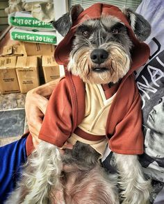 Choose your Schnauzer  or hoodie now⏩Check the link in @schnauzerworld profile! International shipping! ️ To be featured ⏩Follow us ⏩Choose your best photo ⏩Tag us #schnauzerworld  Reposted from: @dailyporkchop