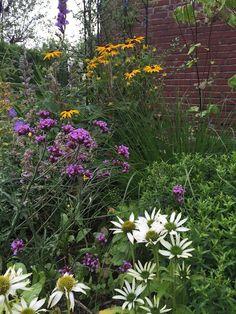Sunnys Haus: Der Garten im August