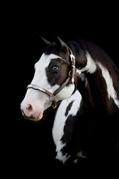 #horse  #cheval