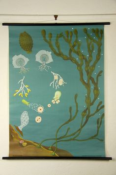 Seaweed Zoology Wall Chart burkedecor.com