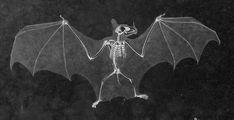 Bat Skeleton, Skeleton Drawings, Skeleton Tattoos, Halloween Bats, Vintage Halloween, Pyrography Designs, Spooky Tattoos, Dark Drawings, Animal Bones