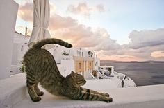 cat, greece