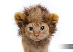 Cat halloween costumes your cat will hate but will crack you up - AOL