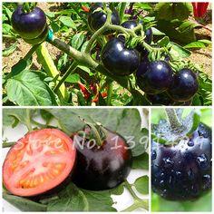 200 개/가방 검은 토마토 씨앗 유기농 야채 과일 씨앗 질병 내성 장식 식물 과일 나무 모종
