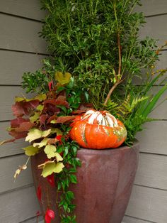 Holiday Container Gardens - traditional - Entry - Seattle - Le jardinet