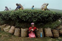 Nuwara Eliya, Sri Lanka | Steve McCurry